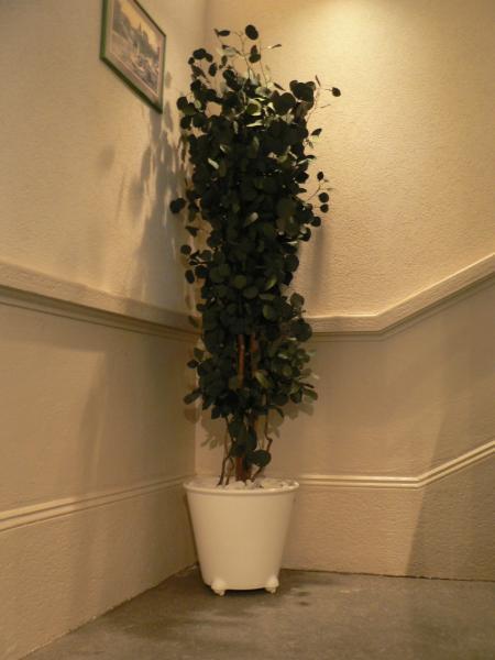 Décorez votre espace professionnel avec des plantes !