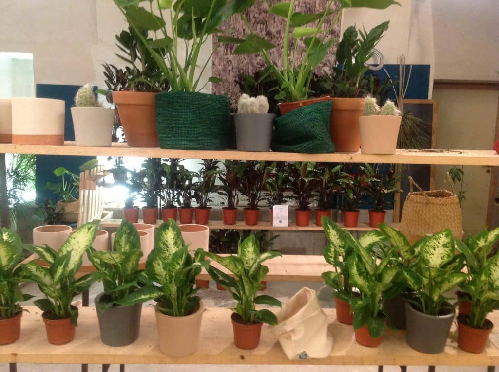 «Maison Bouture» à Lyon : quatre trentenaires inventent avec succès un mode low-cost de vente de plantes vertes