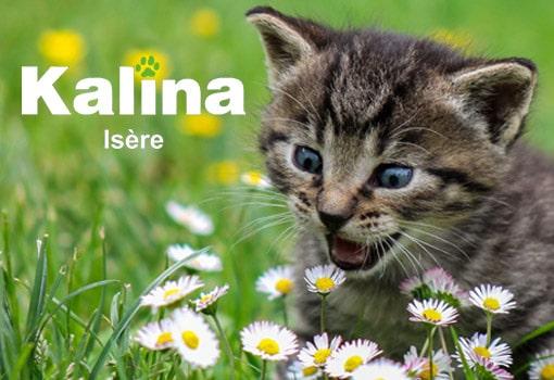 Le meilleur de la croquette pour chats est signé Ninette Croquette [Essai gratuit]