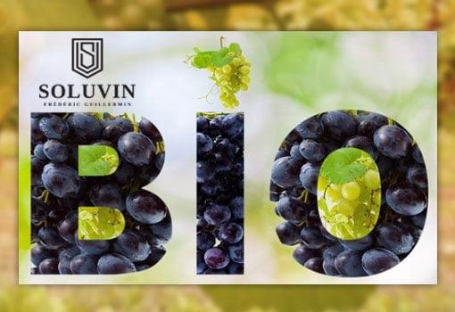 Le vin bio, une tendance de fond confirmée chez Soluvin