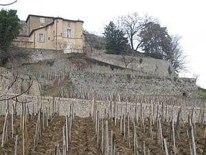 L'homme d'affaires François Pinault s'offre Château Grillet