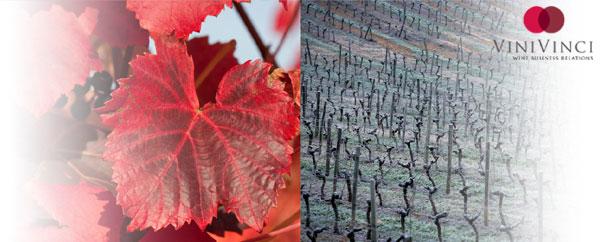 Oenotourisme en Rhône-Alpes, séjours œnologiques et circuits vins accompagnés