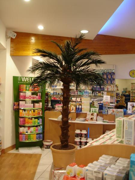 Un palmier d'intérieur sans besoin d'arroser et sans aucun soin